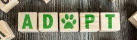 January 27: Pet Adoption Event